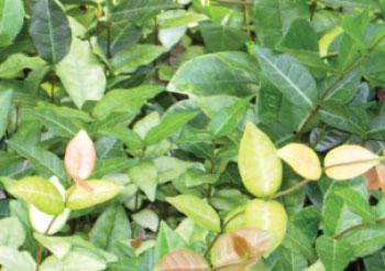 1214-plants2-secondary-pic