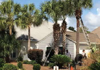 0115-palm-pruning-secondary-pic