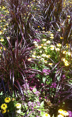 Ornamental Grasses Florida Florida friendly ornamental grasses fcap photo2 workwithnaturefo