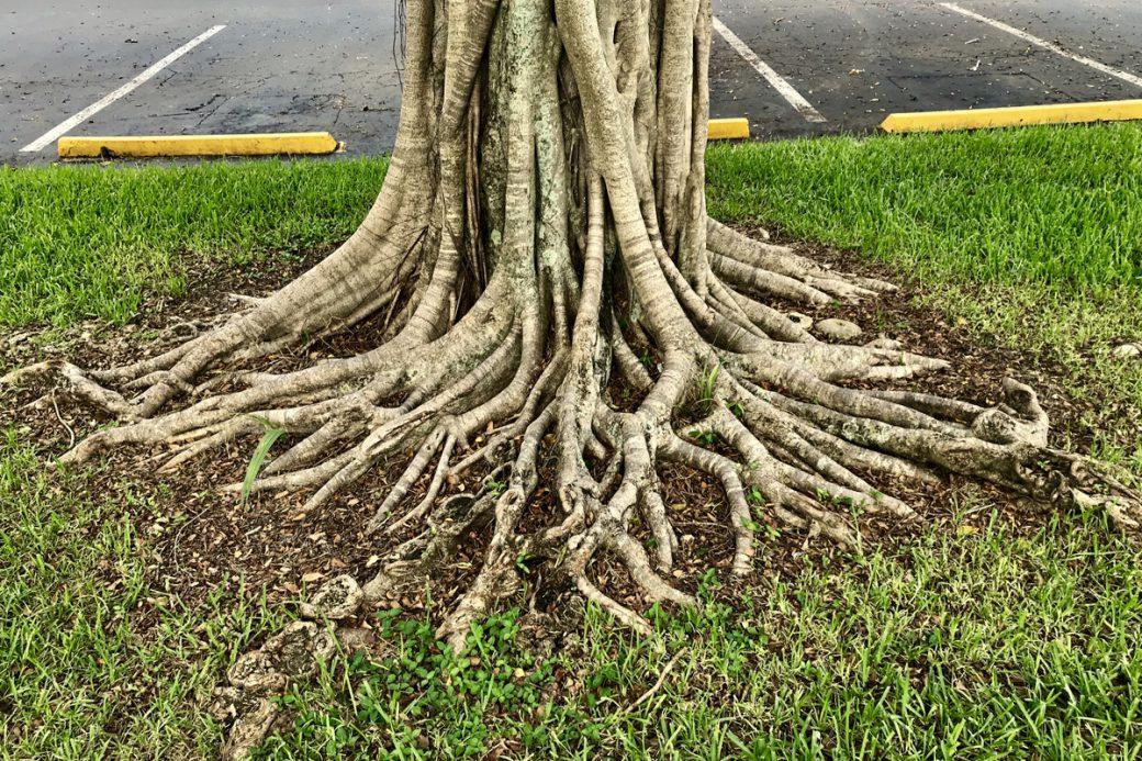 tree-roots